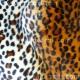 Animal Prints - Cheetah