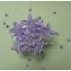 Babys Breath - Lilac
