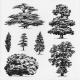 Black Foiled Trees