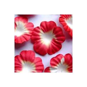 https://www.jjdcards.com/store/1504-2137-thickbox/red-white.jpg
