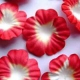 Paper Flowers - Red & White