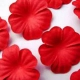 Paper Flowers - Red