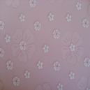 Daisies - Pink