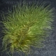Moss Green Feathers - Assorted Sizes