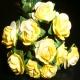 Paper Tea Roses - Yellow & Cream