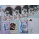 Feline Friends - Fluffy Felines