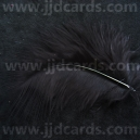 Black Feathers - Assorted Sizes