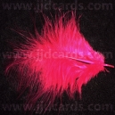Pink Feathers - Assorted Sizes