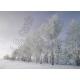 Kanban - Winter Scenic Vistas