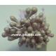 Stamens - Lilac