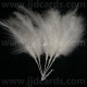 Long Stemmed Feathers - White