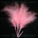 Long Stemmed Feathers - Pink