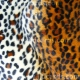 Animal Prints - Cheetah
