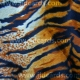 Animal Prints - Tiger