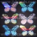 Large Butterflies