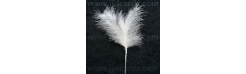 Short Stemmed Feathers